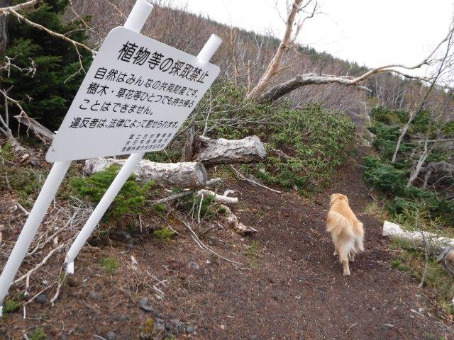 御道中 大沢崩れ 2016.5.20 112