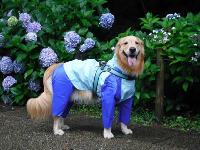 大型犬 レインコート 雨合羽 007