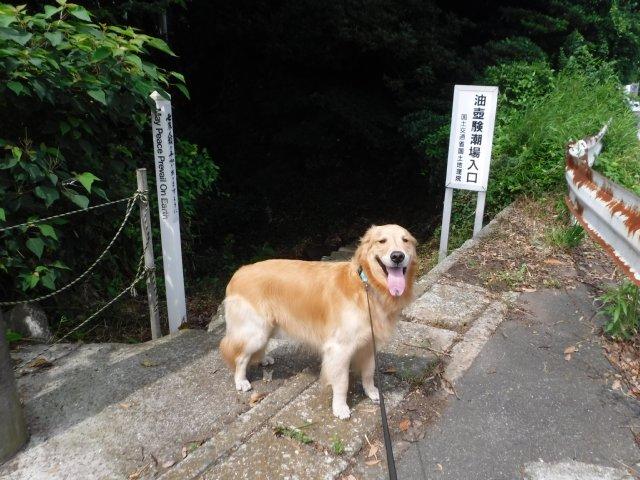 2016-7-2 油壺 犬 001