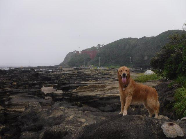 2016-7-2 油壺 犬 050