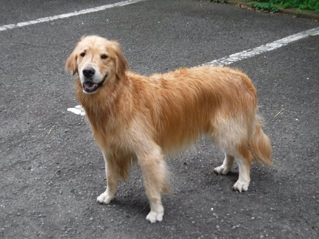 2016-7-2 油壺 犬 072