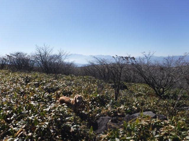 霧ヶ峰高原 2016.11.5 031