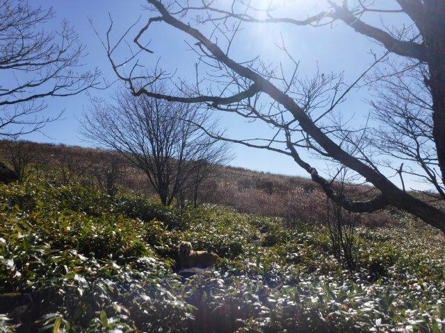 霧ヶ峰高原 2016.11.5 032