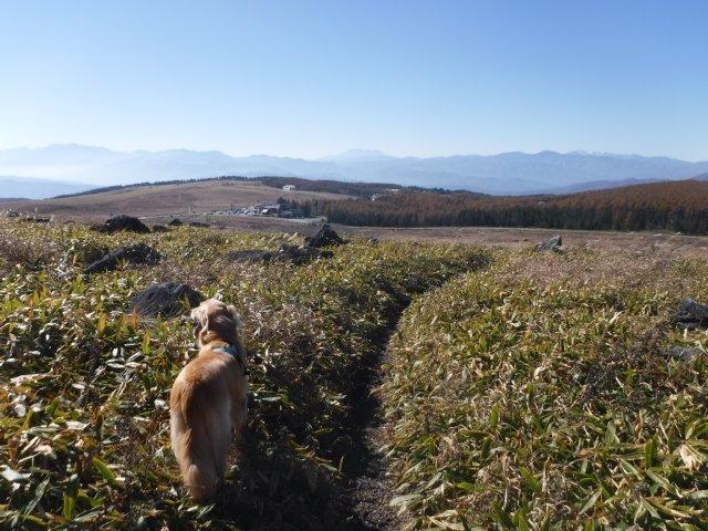 霧ヶ峰高原 2016.11.5 047