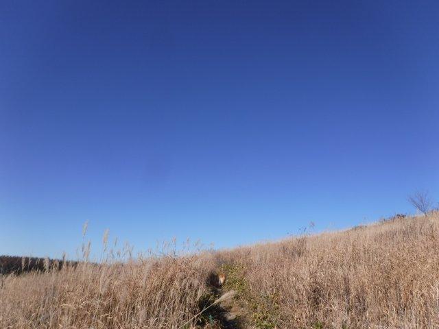 霧ヶ峰高原 2016.11.12 018