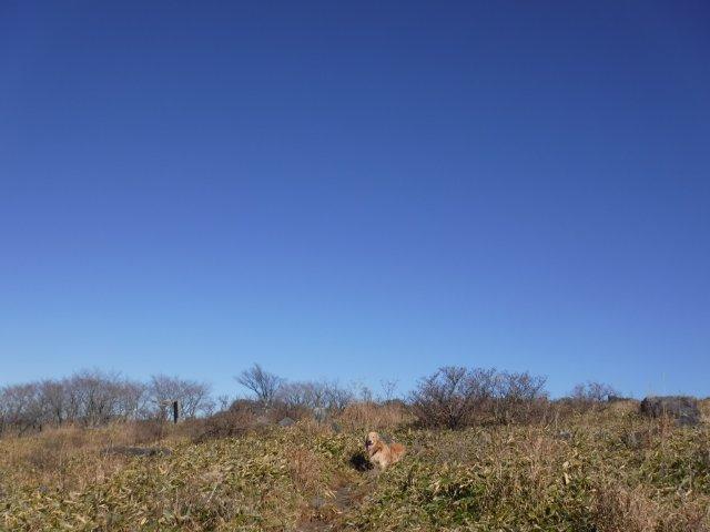 霧ヶ峰高原 2016.11.12 025