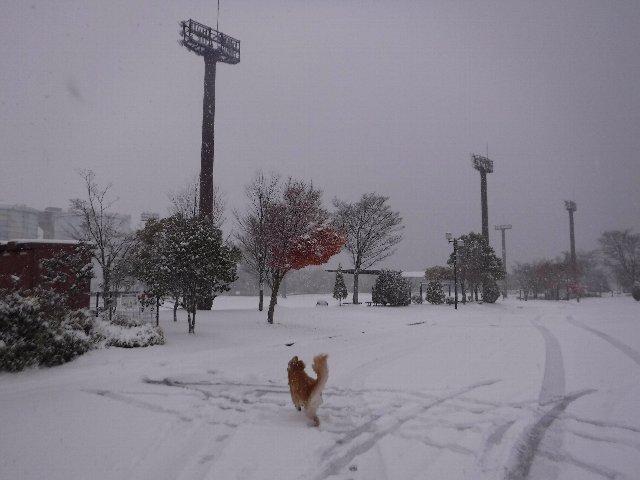 諏訪の雪2016.11.22・24・25 008