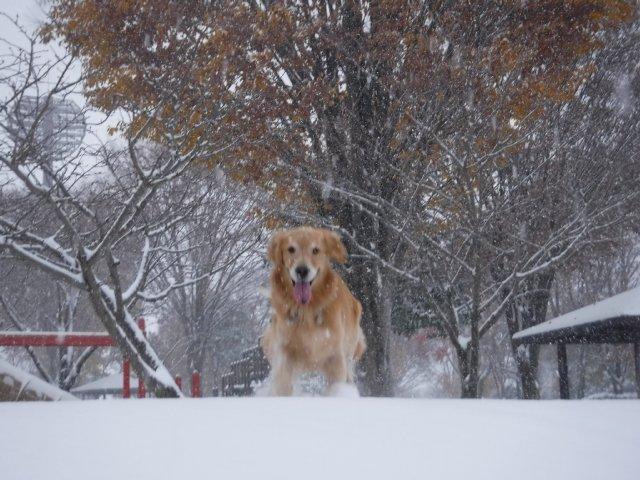 諏訪の雪2016.11.22・24・25 044