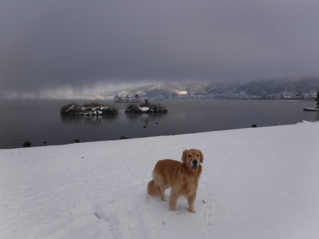 諏訪の雪2016.11.22・24・25 047
