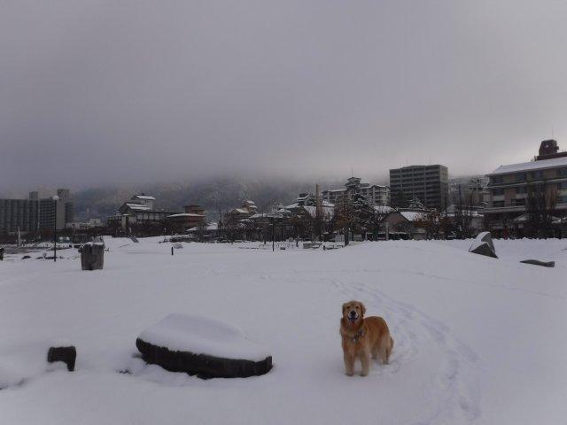 諏訪の雪2016.11.22・24・25 054