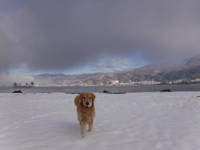 諏訪の雪2016.11.22・24・25 069