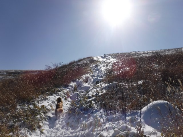 2016.11.26 霧ヶ峰高原 030