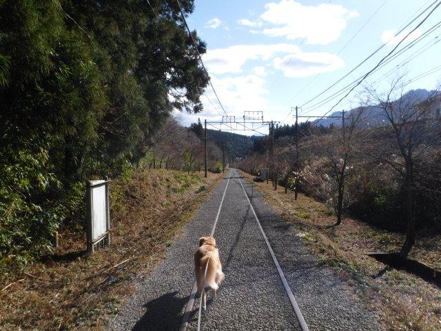 2016.12.10軽井沢めがね橋 024