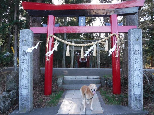 金運神社2016.12.24 006