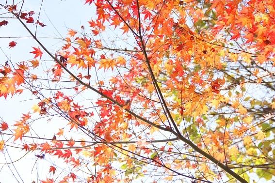 momiji11-b.jpg