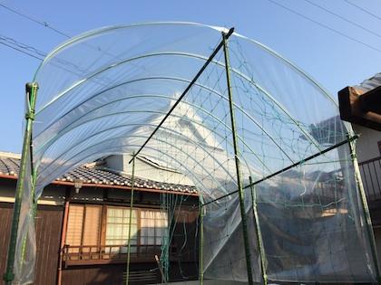 トマトのビニール屋根自作
