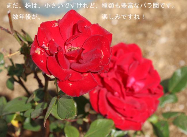 0A1A0373-987654-87654.jpg