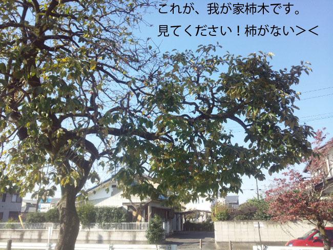 161104_091820-11-04.jpg