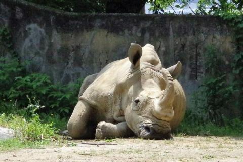 福岡市動物園 ミナミシロサイのロック君 2016年10月29日没