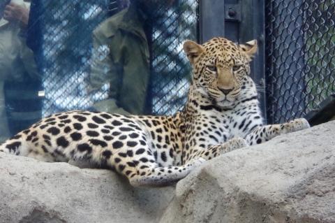 #とべ動物園に旅立ったきららちゃん #福岡市動物園