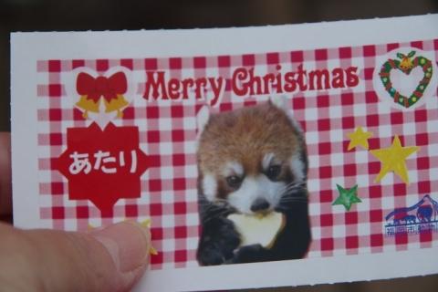 福岡市動物園 レッサーパンダ大当たりくじ