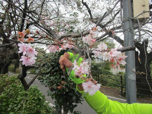 IMG_6575⑩10月桜