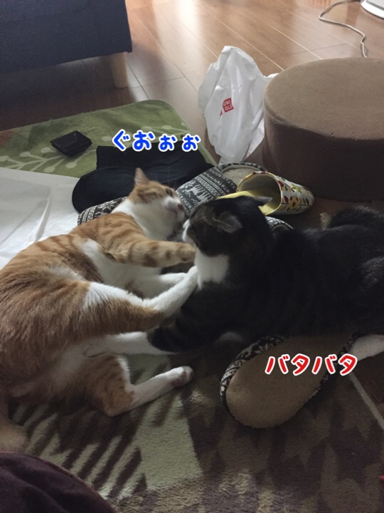 fc2blog_2016112410181642c.jpg