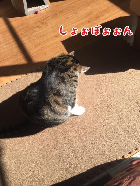 fc2blog_20161130135541e7b.jpg