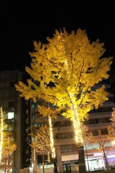本町2_convert_20161203215037