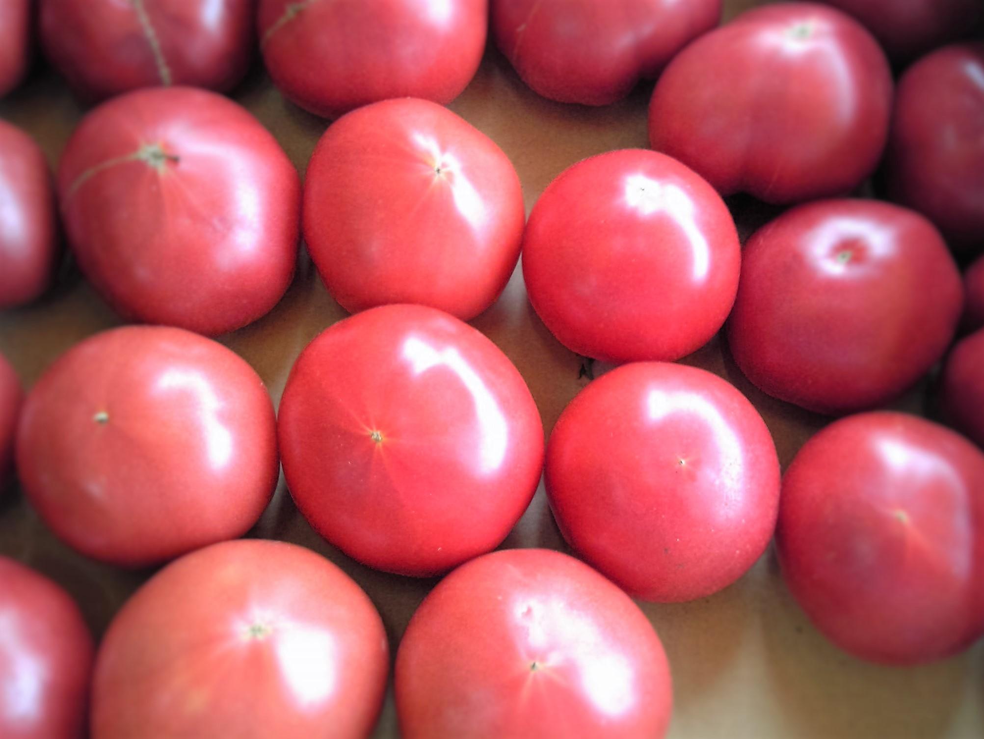 0528トマト