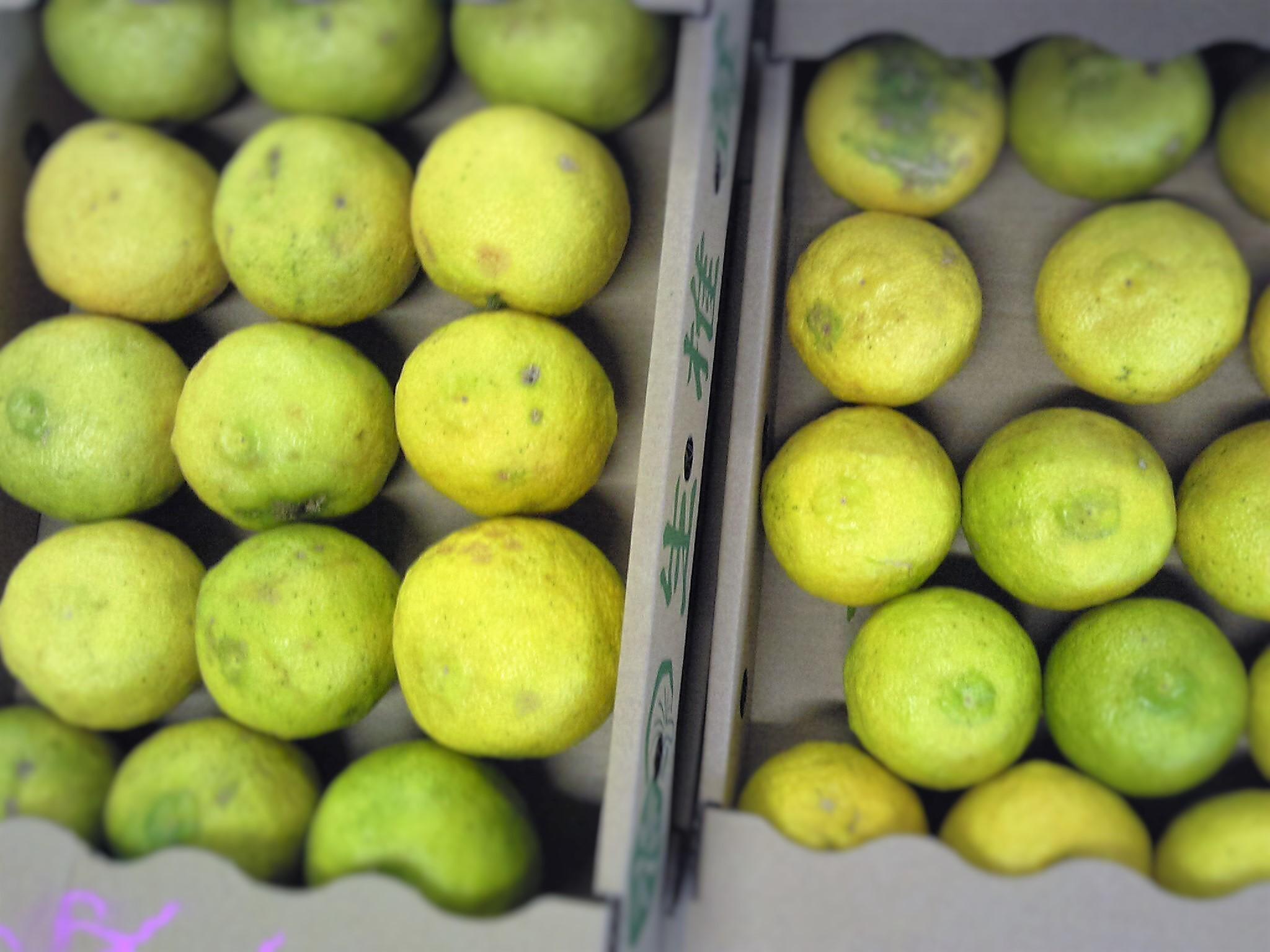 1105柚子-1