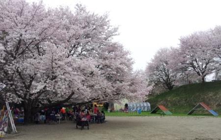 2016お花見コンペ