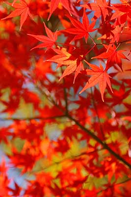 autumn-leaves_00037.jpg
