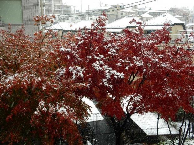 紅葉&雪@通勤路 (17)