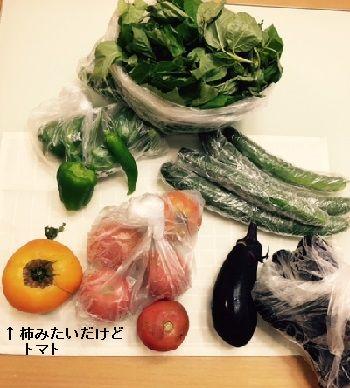 小梅ちゃんの野菜
