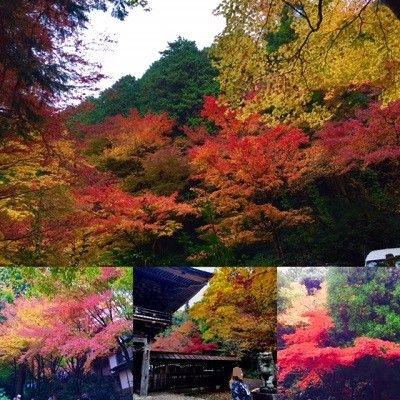 紅葉と桜門と