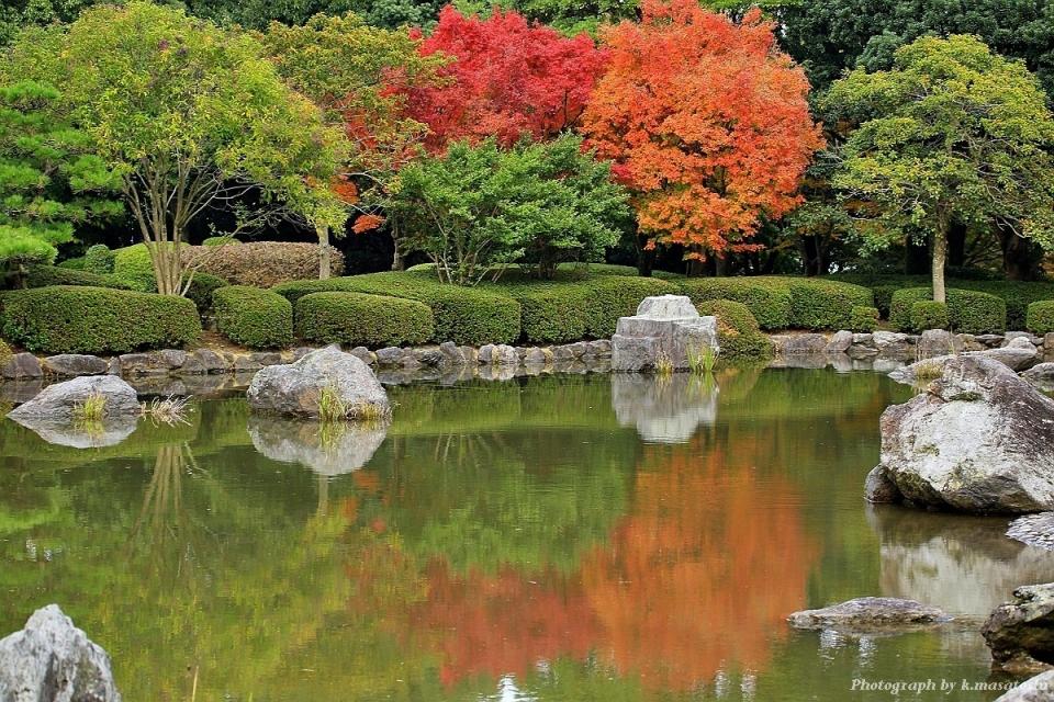 IMG_20652016_1120(福岡県、春日公園、ミヤマホウジロ、マミチャなど)