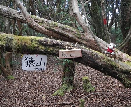 201612_Saruyama_29.jpg