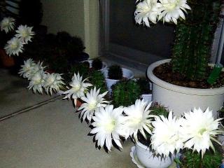 160608_3977ベランダの子「花盛丸」達の花園VGA