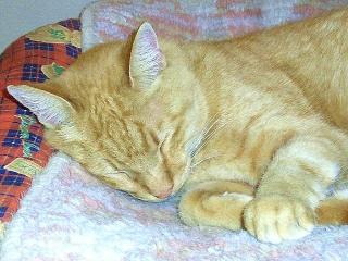 161029_4281今夜のトラ美ちゃんの寝顔VGA