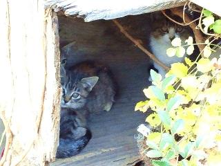 161118_4316バス停で見掛けた子猫達VGA