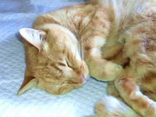 161223_4363今日のトラ美ちゃんの寝顔VGA