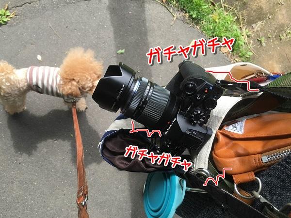 20160624-10.jpg