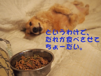 写真2130(№387)1