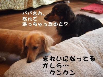 写真2297(№405)1