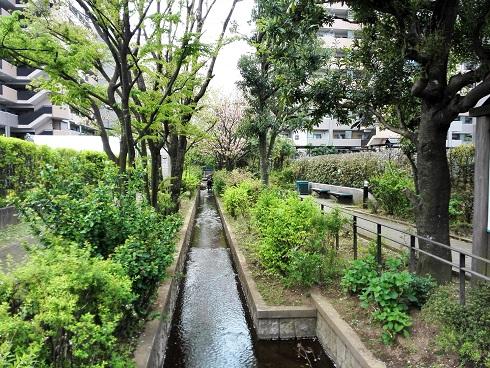 1 公園内の小川
