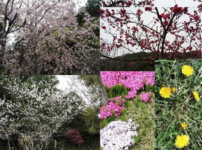 13 里山の風景・花が咲き乱れる