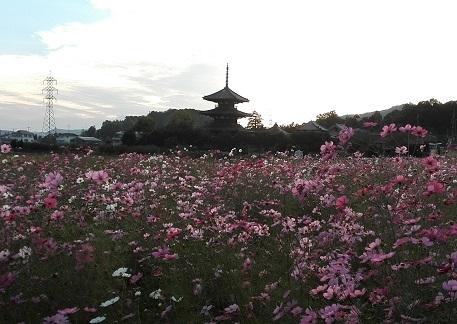 1 法起寺