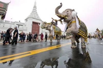 Bangkok Post ゾウ