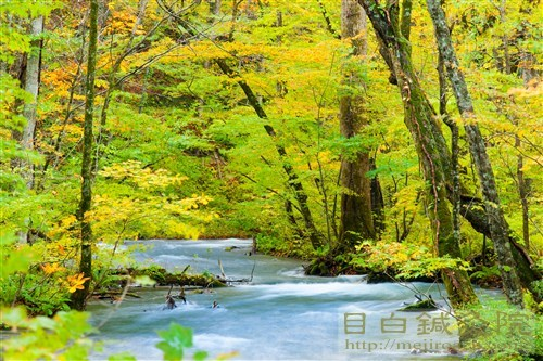 20161025奥入瀬渓流の紅葉6
